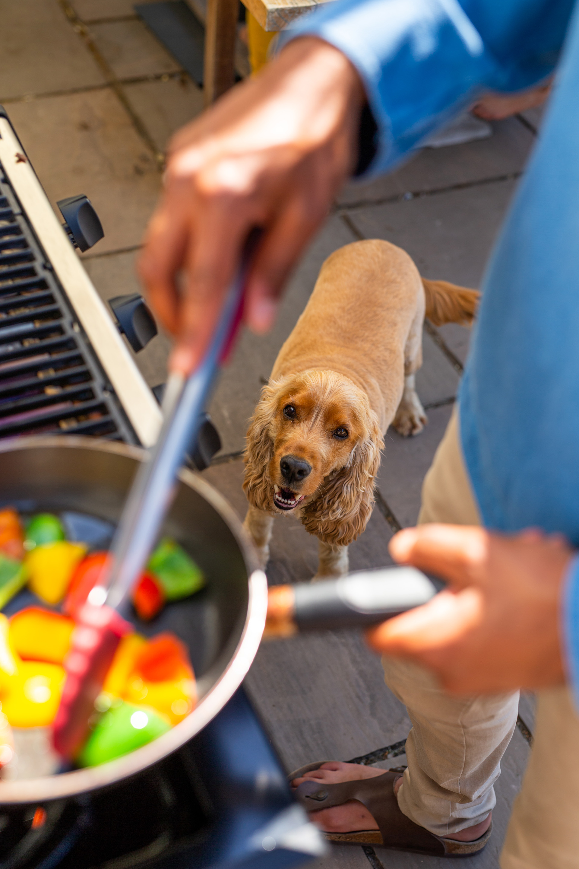 A dog looking up at food being cooked on the BBQ